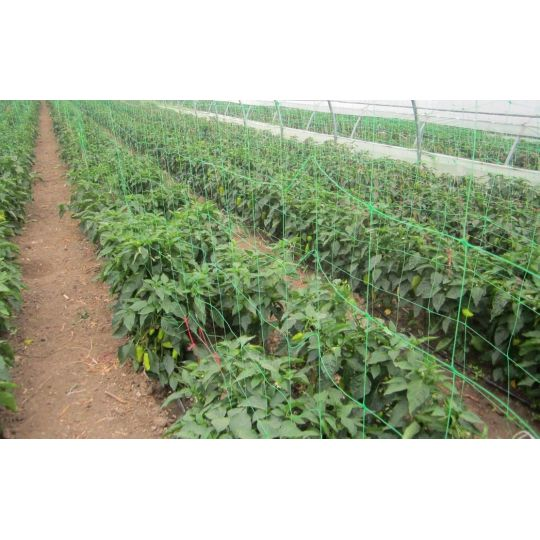 Plasa pentru Plante, Verde, 5 ml x 1.7 ml, EvoTools