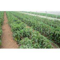 Plasa pentru Plante, Verde, 10 ml x 1.7 ml, EvoTools